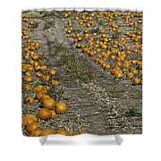 The Great Pumpkin Patch Trail Shower Curtain