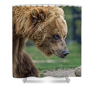 The Grizzly In Spring Shower Curtain