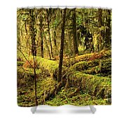 The Hall Of Mosses Shower Curtain