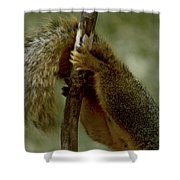 The Hang On Tail Shower Curtain