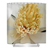 the heart of a southern magnolia grandiflora photograph by kathy clark. Black Bedroom Furniture Sets. Home Design Ideas