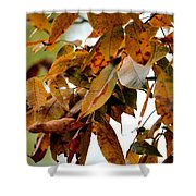 The Hickory In Autumn 2 Shower Curtain
