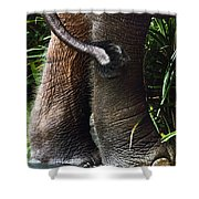 The Hindquarters Of A Malaysian Shower Curtain