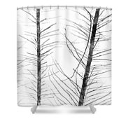 The Hirsute Trees Shower Curtain