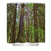 The Hoh Rain Forest Shower Curtain