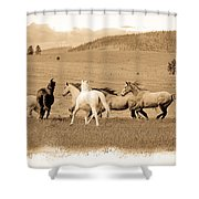 The Horse Herd Shower Curtain