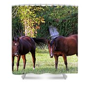 The Horses Shower Curtain