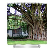 The House Beside The Banyan Tree Shower Curtain