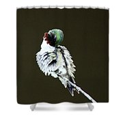 The Hummer Image Shower Curtain