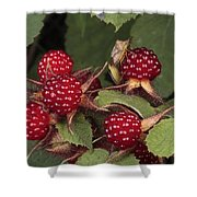 The Invasive Wine Berry And Shield Bugs Shower Curtain
