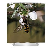 The Jewel Like Eyes, Transparent Wing Shower Curtain