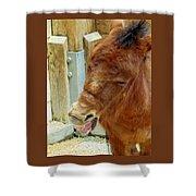 The Joker,donkey Shower Curtain