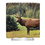 The King Of Winslow Hill Shower Curtain