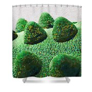 The Land Of Milk And Money Shower Curtain