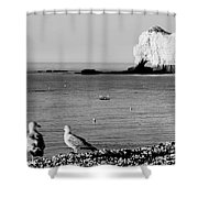 The Lazy Albatrosses Shower Curtain