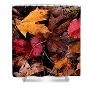 The Leaves Shower Curtain