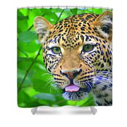 The Leopard's Tongue Shower Curtain