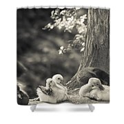 The Little Ones Rest Shower Curtain