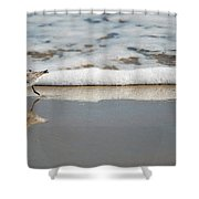 The Lone Sandpiper Shower Curtain