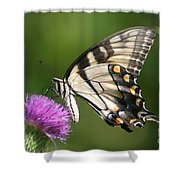 The Love Of Thistle Shower Curtain