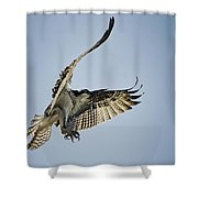 The Magnificent Osprey  Shower Curtain
