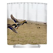 The Mallard Ducks Flight Shower Curtain
