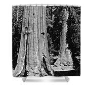 The Mariposa Grove In Yosemite Shower Curtain