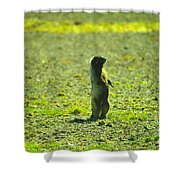 The Marmon Takes A Look Shower Curtain
