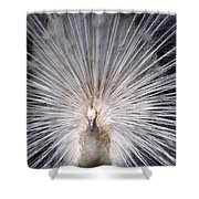 The Mating Fan Shower Curtain