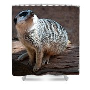 The Meercat  Shower Curtain