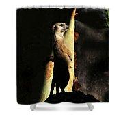 The Meerkats Perch Shower Curtain