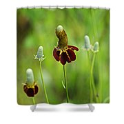 The Mexican Hat Flower Shower Curtain