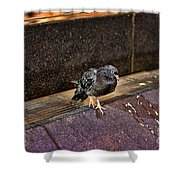 The Mighty Pigeon Shower Curtain