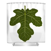 The Mission Fig Leaf Shower Curtain