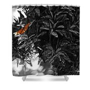 The Monarch Stands Alone Shower Curtain