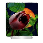 The Moon And The Rose Shower Curtain