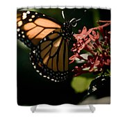 The Morning Monarch Shower Curtain