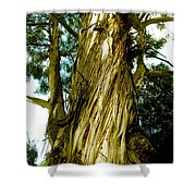 The Morning Tree Shower Curtain