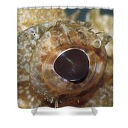 The Mosaic Eye Of The Venemous Shower Curtain