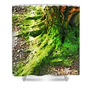 The Moss Covered Roots Shower Curtain