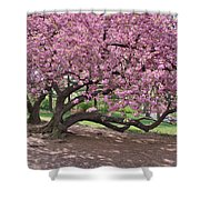 The Most Beautiful Cherry Tree Shower Curtain