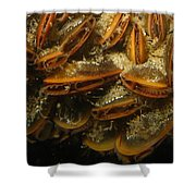 The Mussel Group Shower Curtain