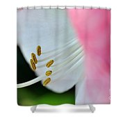 The Naked Lady - Hippeastrum Shower Curtain