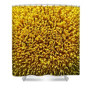 The Nature Of A Sunflower Shower Curtain