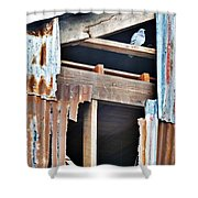 The Nervous Pigeon  Shower Curtain
