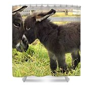 The New Arrival Shower Curtain