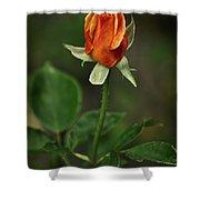 The Orange Rose Shower Curtain
