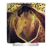The Orchid Center Shower Curtain