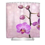 The Orchid Tree - Texture Shower Curtain