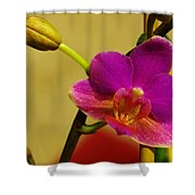 The Original Orchid Shower Curtain